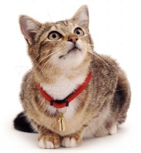 Ветеринарна клиника Балчик, ветеринар Балчик ветеринарен лекар, поводи, нашийници, каишки за котки, аксесоари за кучета, каишки за кучета, аксесоари за домашни любимци, услуги