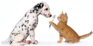 Ветеринарна клиника Балчик, ветеринар Балчик ветеринарен лекар, ваксинации, грижа за зъбите, зъби, домашни любимци, услуги