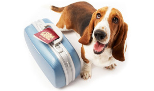 Ветеринар Балчик, ветеринарна клиника Балчик, ветеринарен кабинет Балчик, хирургия, кастрация, домашни любимци, Ви-Вет, услуги, подстригване, храна, пътуване в чужбина, пътуване на домашен любимец