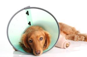 Ветеринар Балчик, ветеринарна клиника Балчик, ветеринарен кабинет Балчик, хирургия, кастрация, домашни любимци, Ви-Вет, услуги, подстригване, храна