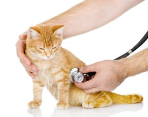 Ветеринар Балчик, ветеринарна клиника Балчик, ветеринарен кабинет Балчик, хирургия, изследвания, домашни любимци, Ви-Вет, услуги, подстригване, храна