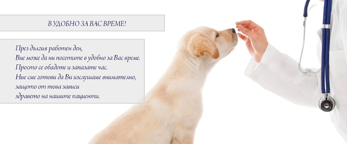 ветеринар Балчик, ветеринарна клиника Балчик