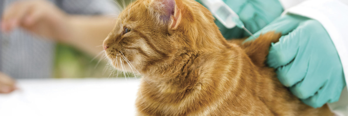 Ветеринарна клиника Балчик, ветеринар Балчик, ветеринарен лекар Балчик Ви-вет