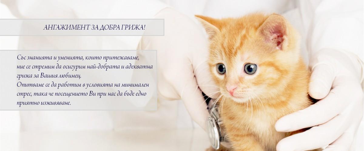 ветеринар Балчик, ветеринарна клиника Балчик, домашни любимци, подстригване, хирургия, стационар